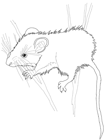 360x480 Deer Mouse Coloring Page Free Printable Coloring Pages
