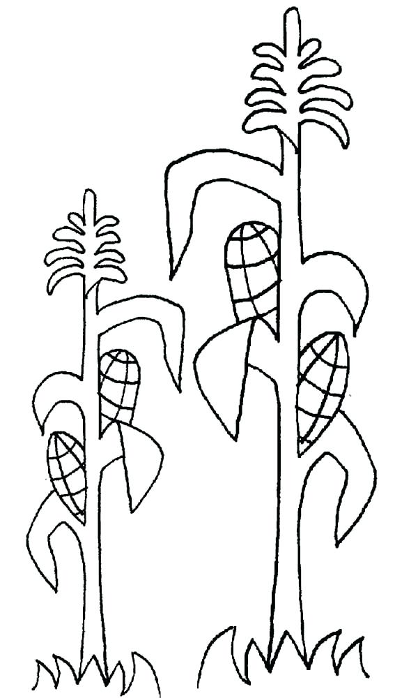 600x1000 Ears Coloring Page Growing Corn Ears Coloring Page Mickey Mouse