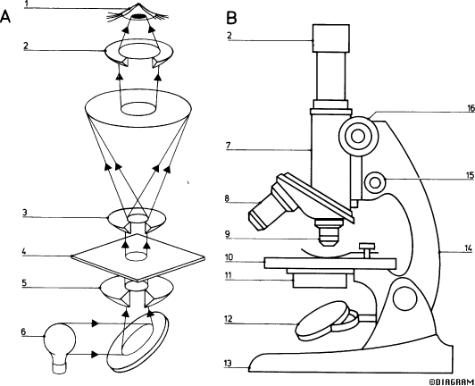microscope drawing at getdrawings com