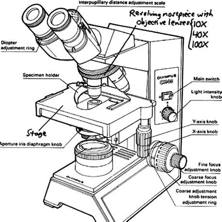 Microscope drawing at getdrawings free for personal use 459x457 compound binocular light microscope labeled ccuart Image collections