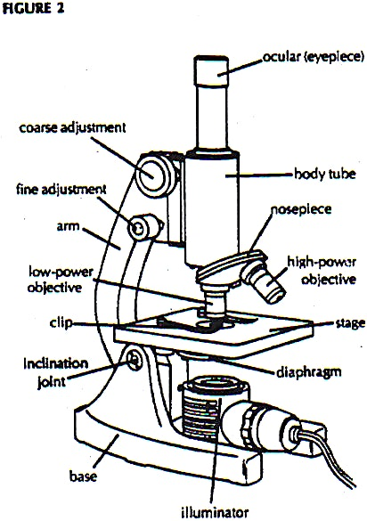Microscope drawing and label at getdrawings free for personal 412x585 diagram microscope labeling game throughout the parts enticing ccuart Choice Image