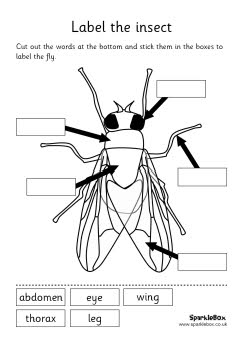 242x342 Insect Labeling Sheets And Words This Worked Great For Our