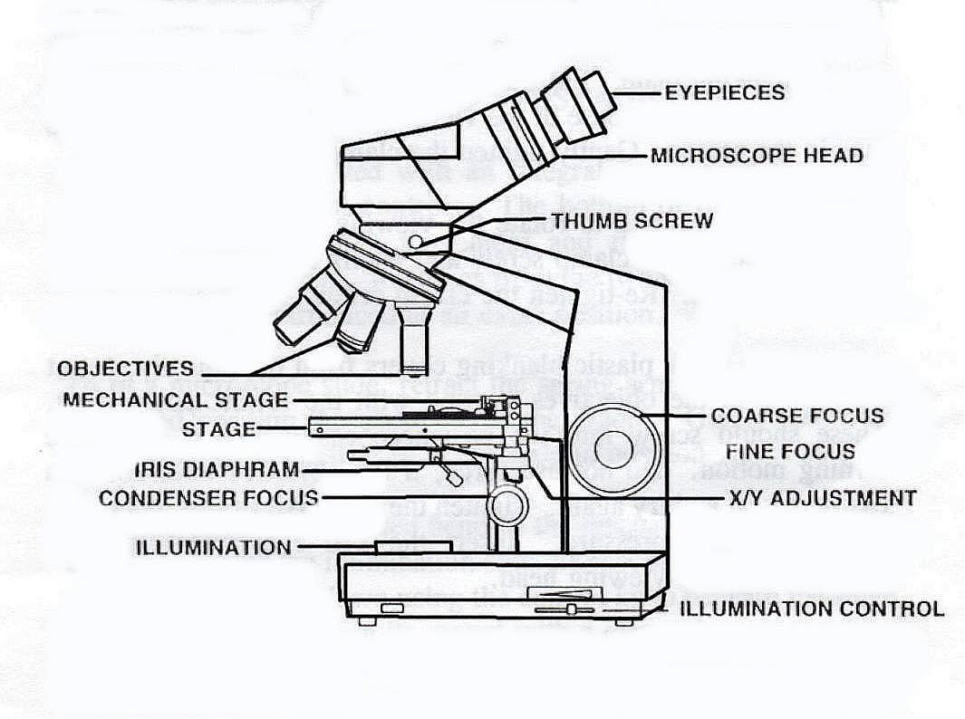 1065x794 Diagram Simple Microscope Diagram