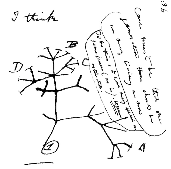 550x545 Michael Strauss On The Act Of Drawing Thinking And Making