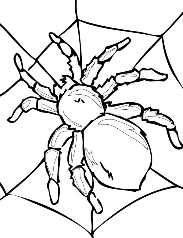 600x777 Tarantula On His Spider Web Coloring Page