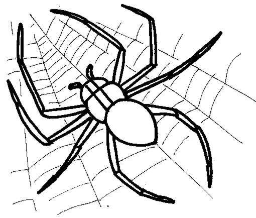 510x434 Dangerous Spider Coloring Pages