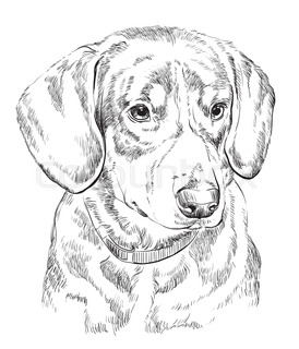 274x320 Miniature Pinscher Vector Hand Drawing Black And White