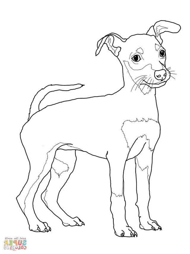 Miniature Pinscher Drawing At Getdrawings Com Free For