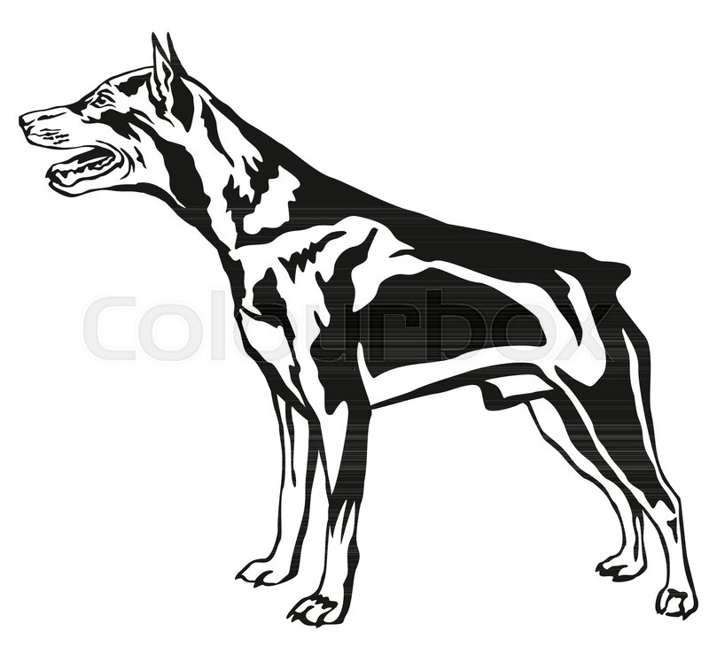 800x739 Decorative Contour Portrait Of Dog, Standing In Profile Miniature