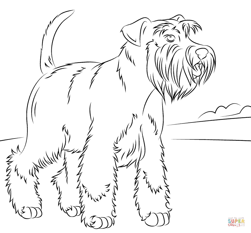 860x799 Miniature Schnauzer Coloring Page Free Printable Coloring Pages