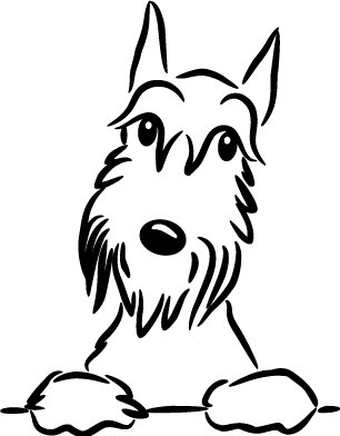 306x392 Pin By Cindy Mcdowell Johnson On Dog Gone It! I Love Schnauzers
