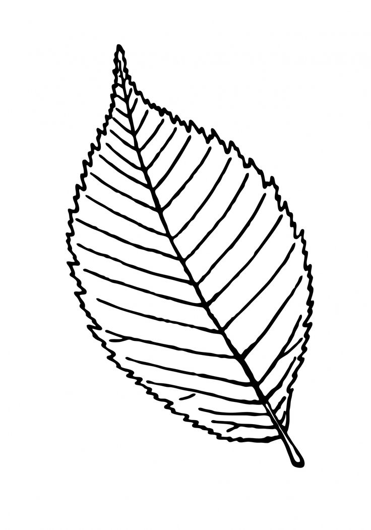 Mint Leaf Drawing