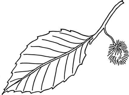 425x313 Beech Leaf Outline Clip Art Vector, Free Vector Graphics