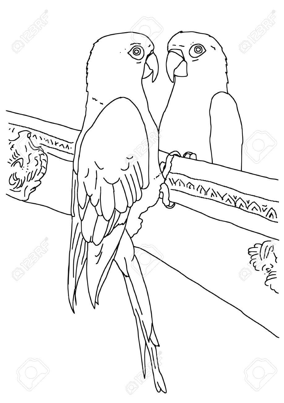 918x1300 Original Black And White Outline Drawing Of A Parrot Looking