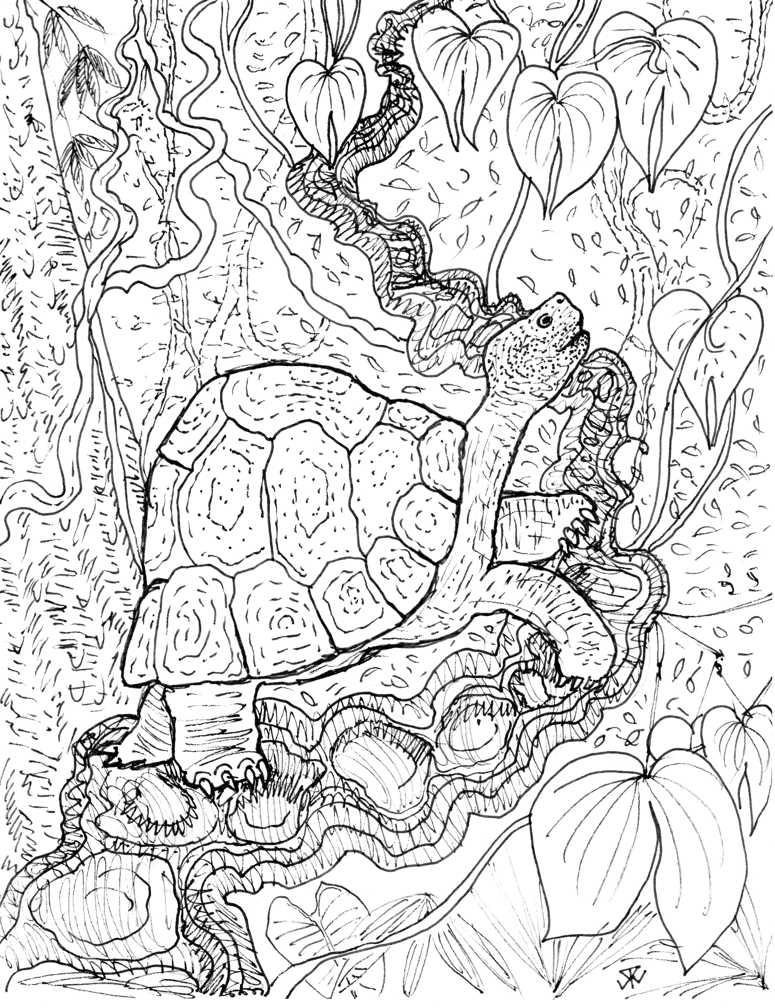 2544x3306 Drawing Of A Tropical Rainforest Drawn Animal Tropical Rainforest