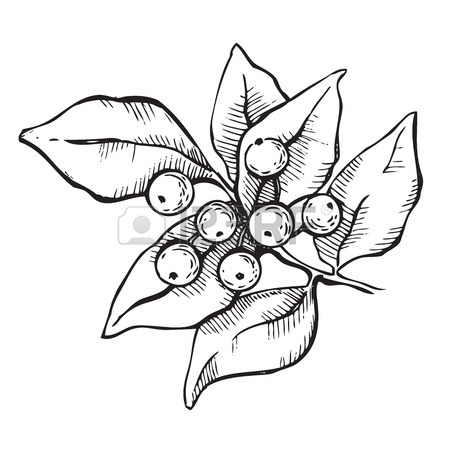 450x450 Vector Seamless Hand Drawn Holly Pattern. Christmas Mistletoe