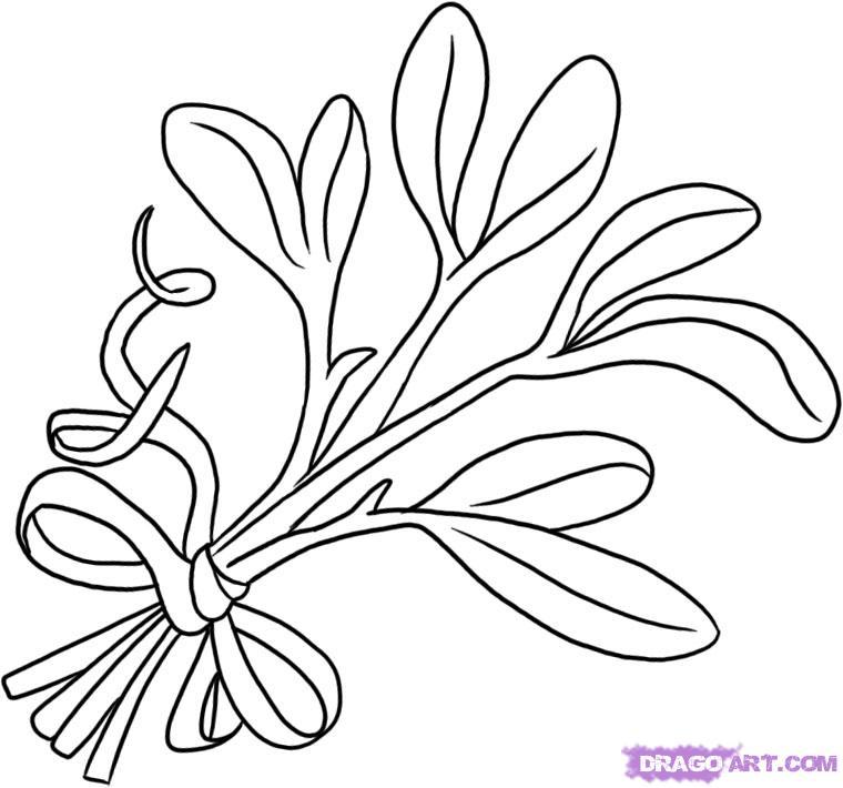 760x710 How To Draw Mistletoe Step By Step Drawing Botanical