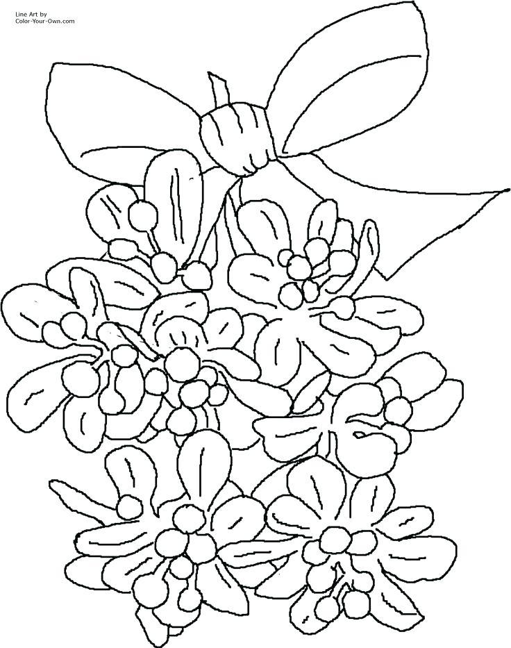 736x933 Mistletoe Coloring Page