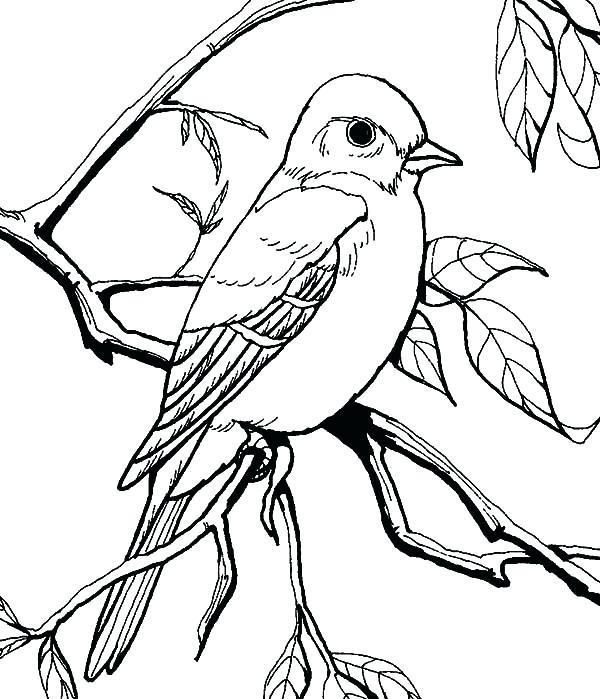 600x699 Mockingbird Coloring Page