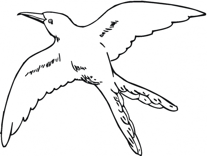 695x525 Mockingbird Coloring Page Northern
