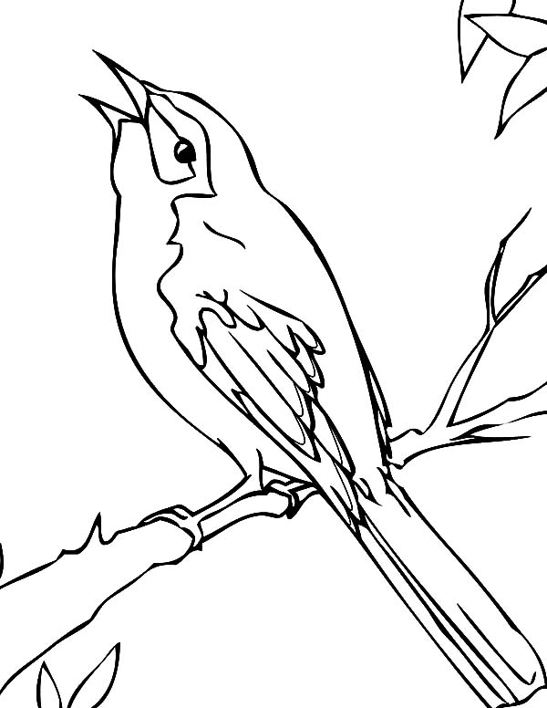 600x776 Mockingbird Coloring Pages