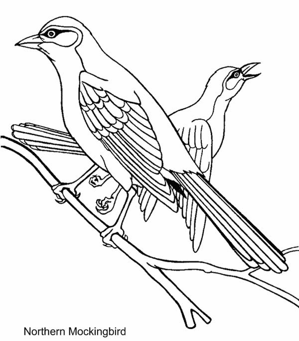 600x684 Northern Mockingbird Coloring Page