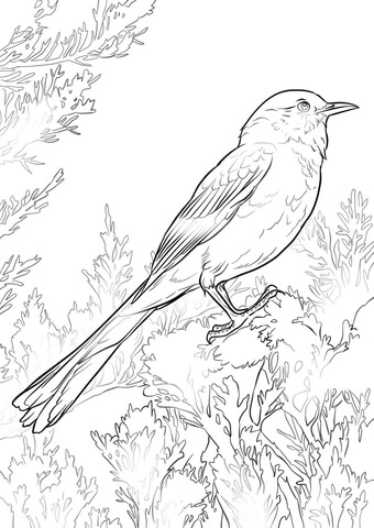 340x480 Perched Northern Mockingbird Coloring Page Free Printable
