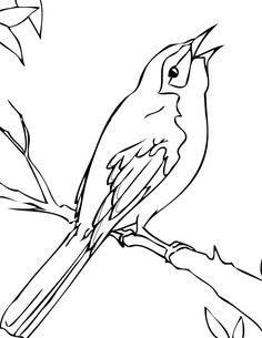 1280x960 Coloring Mockingbird Page 236x305 Florida State Bird Drawing