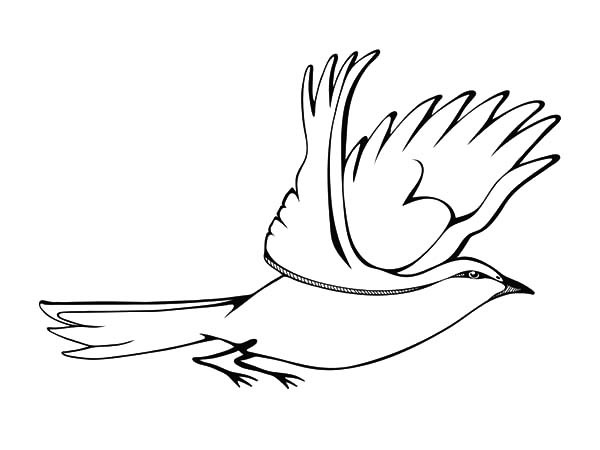 600x450 Flying Mockingbird Coloring Pages Color Luna