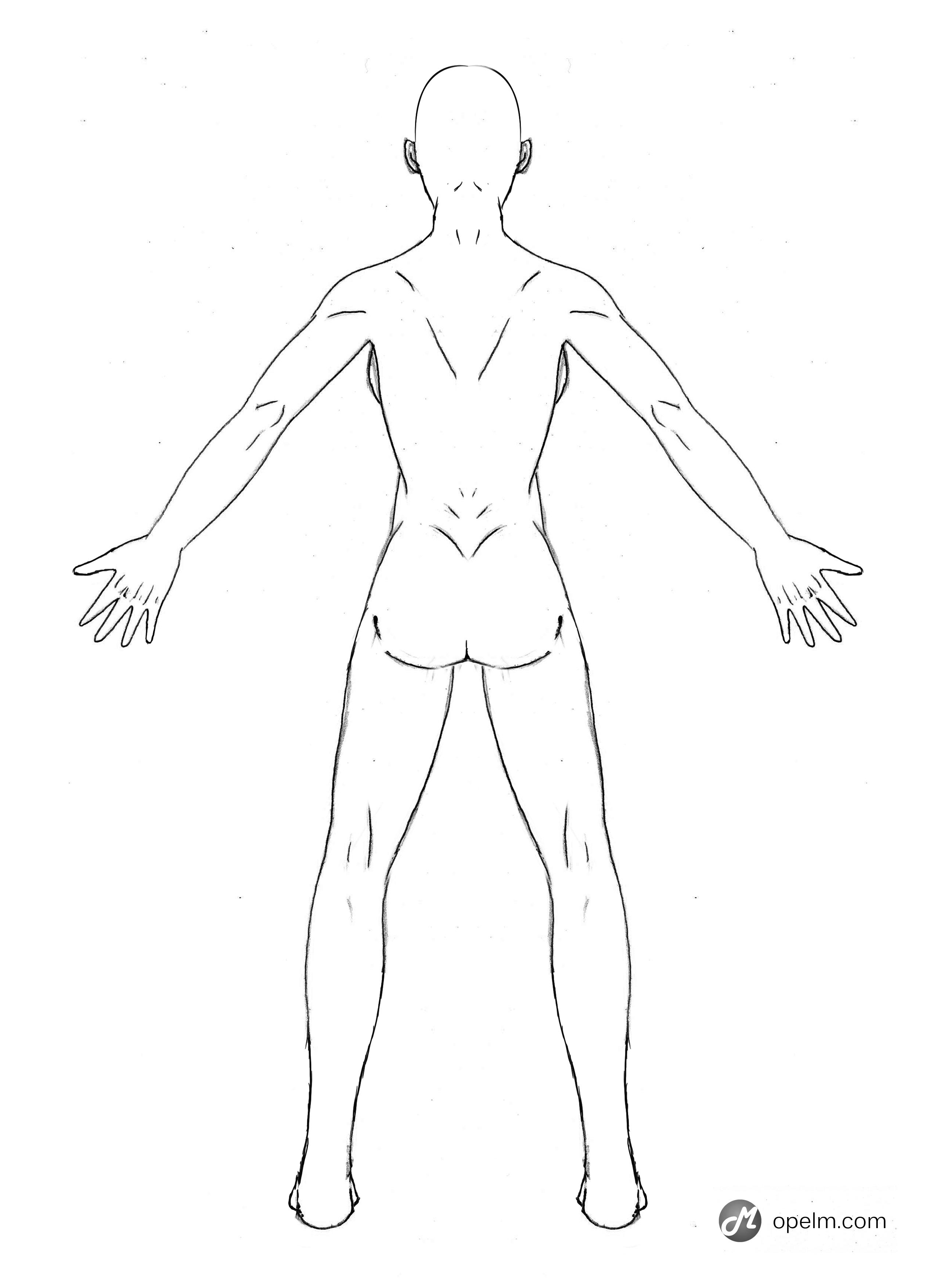 2551x3507 Female Anatomy Drawing Model