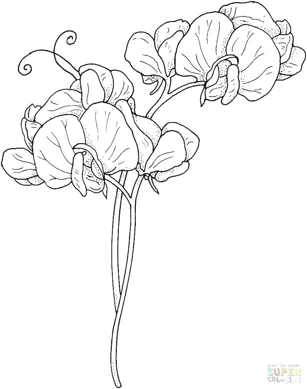 615x777 Awesome Free Printable Flower Coloring Pages For Adults Print