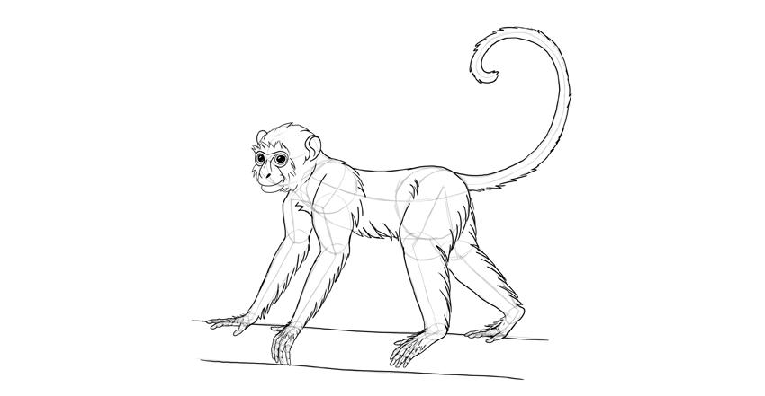 850x441 How To Draw A Monkey Step By Step