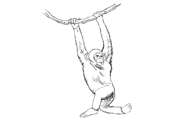 640x400 Sketchbook Challenge 45 How To Draw A Monkey