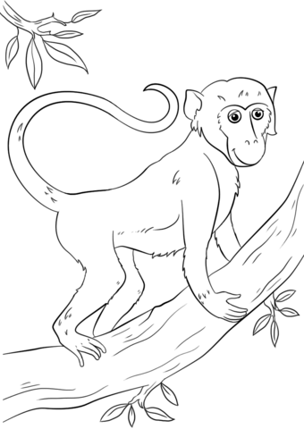 340x480 Cartoon Monkey On Tree Coloring Page Free Printable Coloring Pages