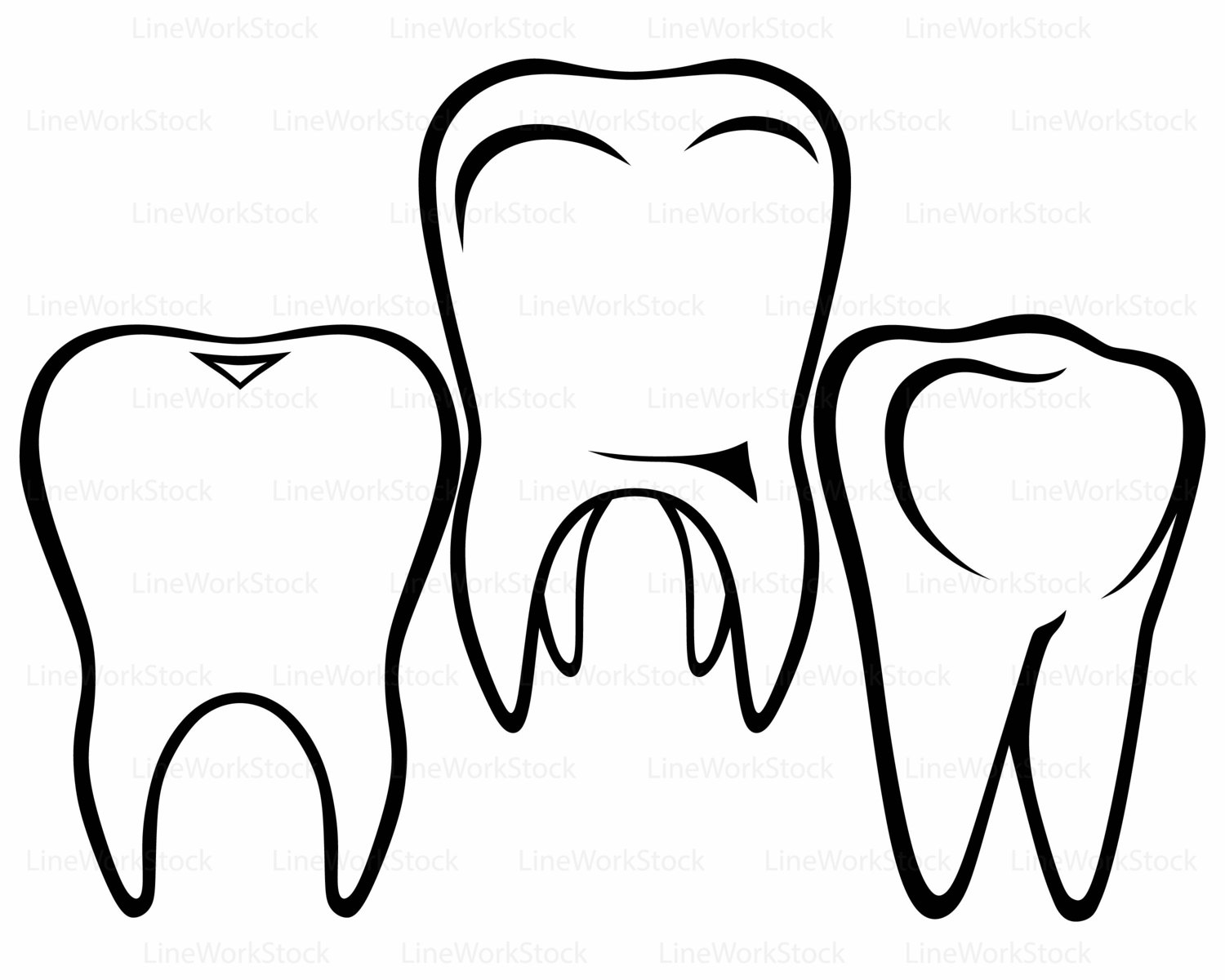 The Best Free Molar Drawing Images  Download From 56 Free Drawings Of Molar At Getdrawings