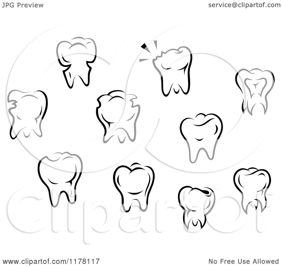 Molar Drawing at GetDrawings.com | Free for personal use Molar ...