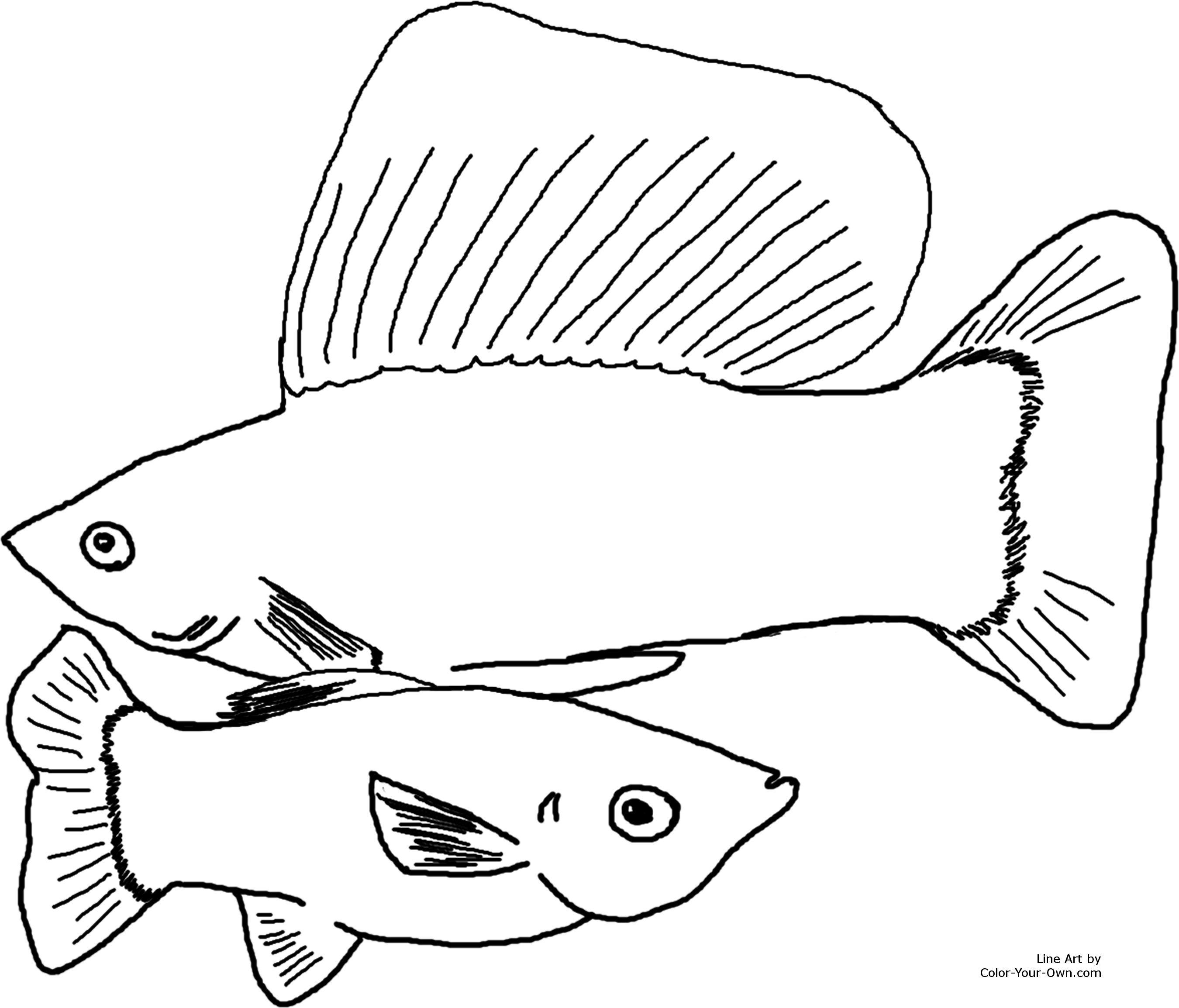 2700x2309 Aquarium Fish Sailfin Mollies Coloring Page