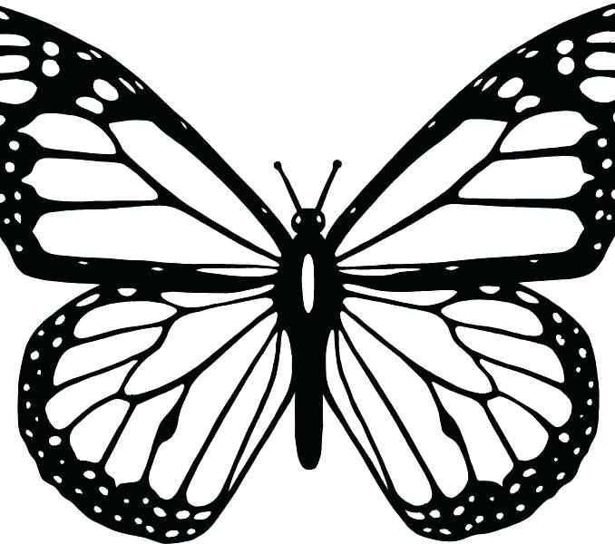 678x600 Monarch Butterfly Coloring Pages Monarch Butterfly Line Drawing
