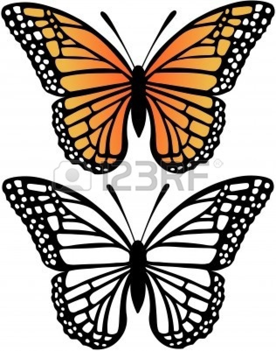 948x1203 Monarch Butterfly Line Drawing Encounter With A Monarch Butterfly