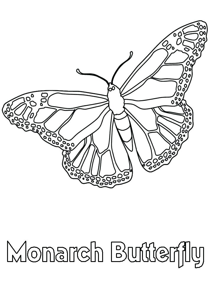 Monarch Butterfly Line Drawing
