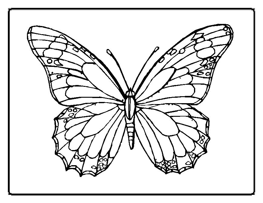 869x671 Butter Coloring Pages Monarch Butterfly Template Clip Art