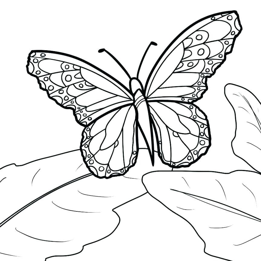 863x863 Monarch Butterfly Life Cycle Coloring Page Caterpillar Life Cycle