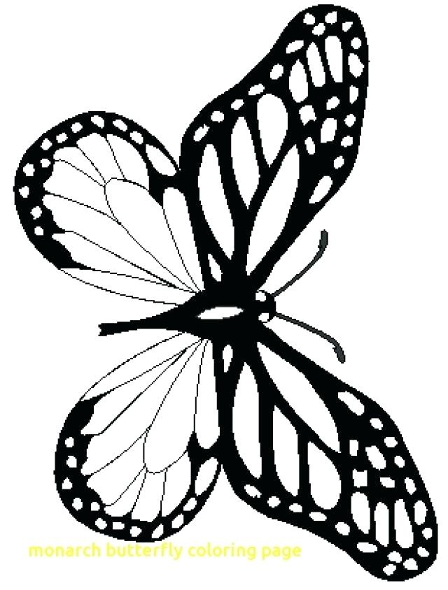 Monarch Caterpillar Drawing at GetDrawings.com   Free for personal ...
