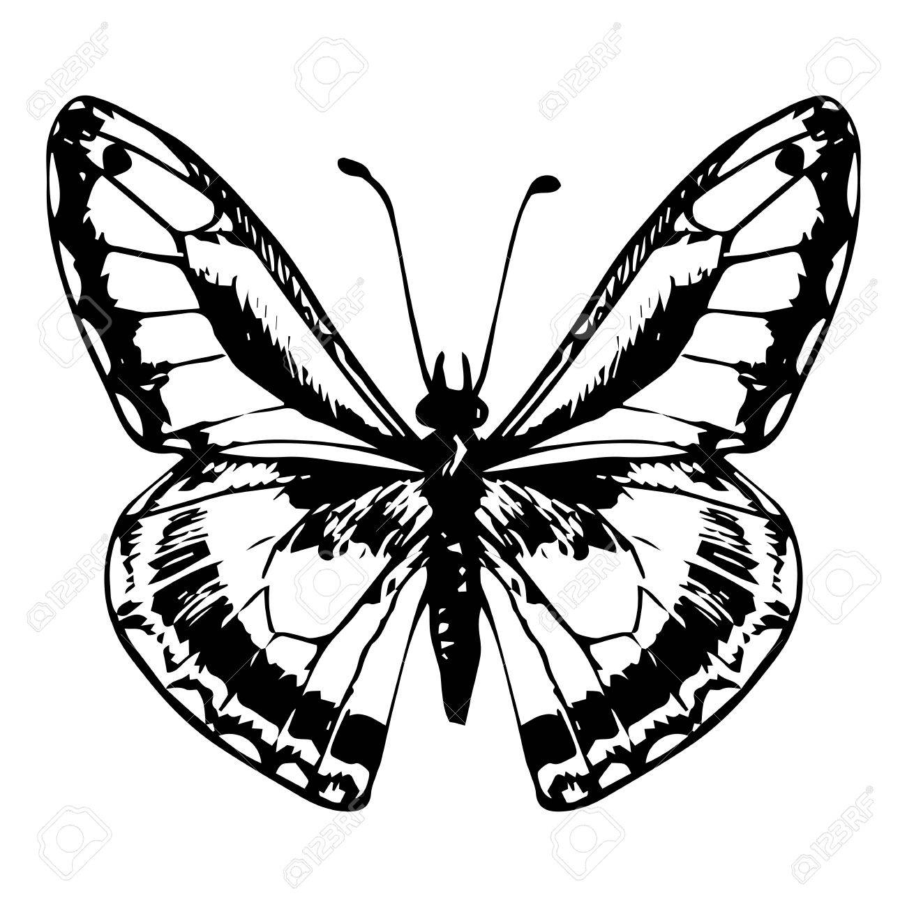1300x1300 Butterfly Line Drawing Monarch Butterfly Line Drawing Flying