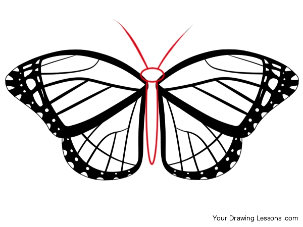 600x450 How To Draw A Monarch Butterfly Your Drawing Lessons