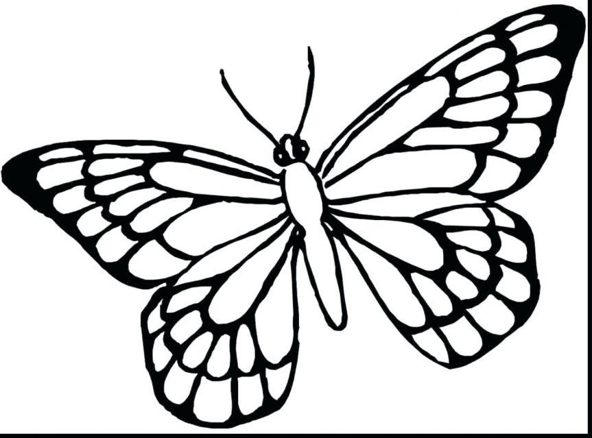863x639 Marvelous Printable Butterflies Coloring Pages With Of And Monarch