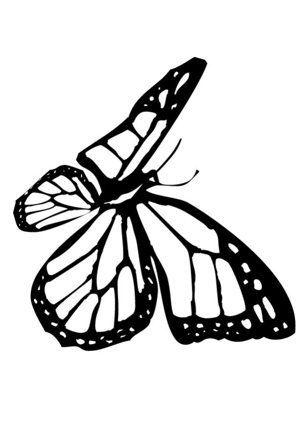 601x850 Monarch Butterfly Drawing Black And White