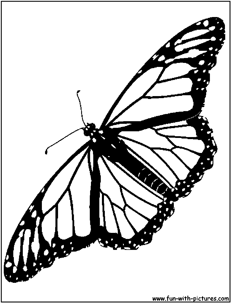 800x1050 Monarch Butterfly Line Drawing Monarch Butterfly Coloring Page