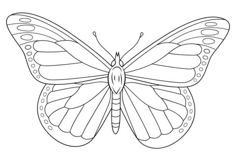 480x331 Monarch Butterfly Coloring Page Free Printable Coloring Pages
