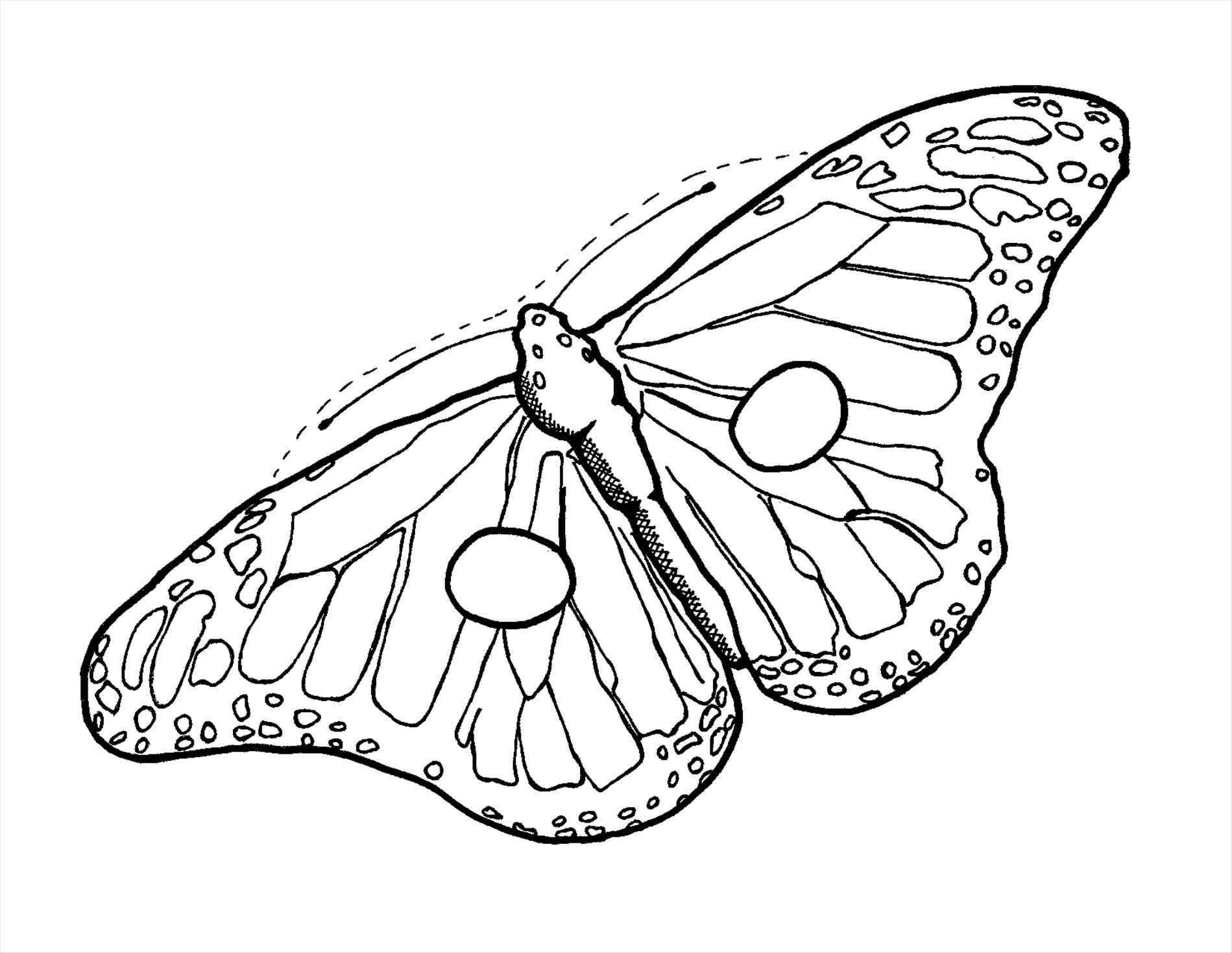 1899x1468 Cute Butterfly Drawing Outline For Kids Line Free Download Clip